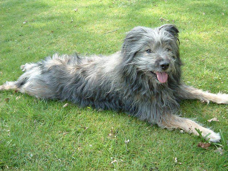 QU-AX der Hund